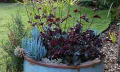 What's Hot for 2015_Garden Trend Report.